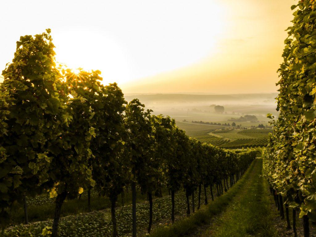 barnes-vineyards